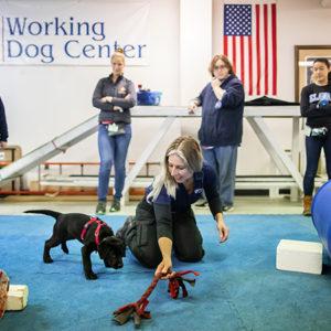 Un fitness per le articolazioni dei cani da lavoro